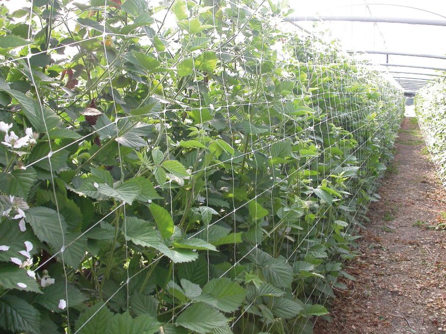 coltivazione-3